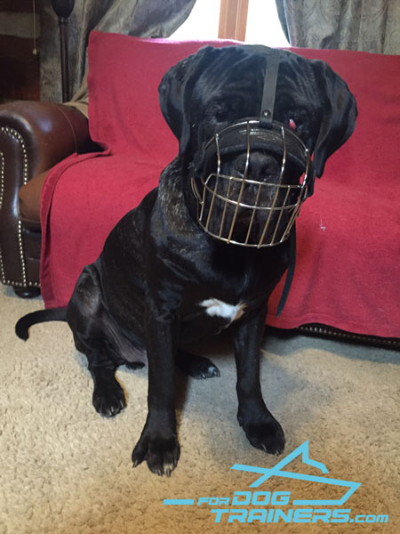 Lightweight Metal Cage Muzzle Perfect Fit for Mastiff Training