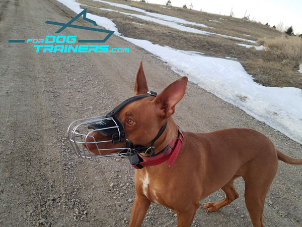 Wire Basket German Shepherd Muzzle Great for Vet Visiting