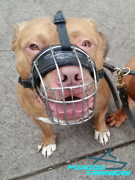 Wire Basket Design Pitbull Muzzle - Lightweight Construction