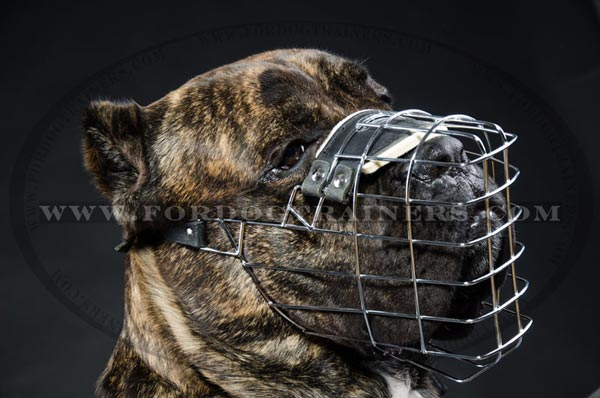 how to get a dog used to a muzzle
