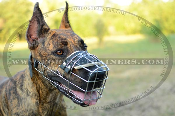Metal Dog Muzzle on Great Dane Dog Breed