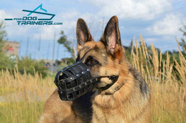 Royal padded German Shepherd muzzle