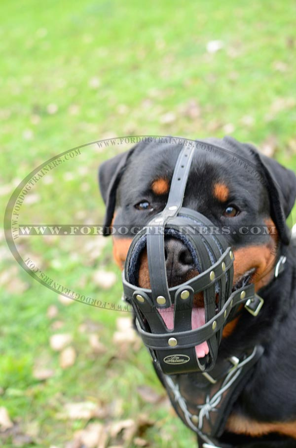 Leather dog muzzle padded for Rottweiler breed