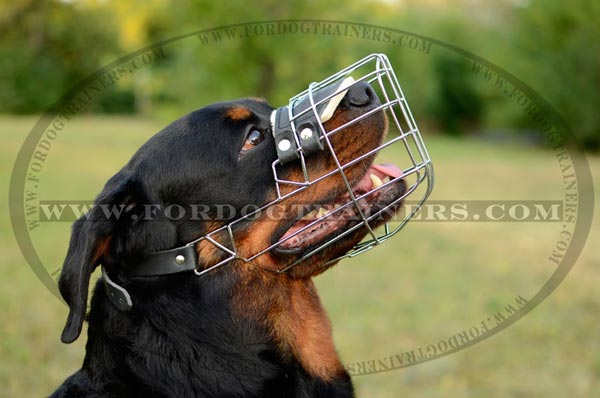 Wire cage muzzle with inside padding for Rottweiler