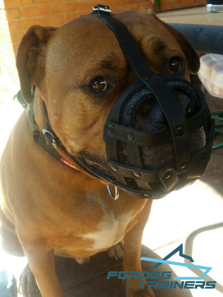 Nappa Padded Dog Muzzle Fits Hooch the Best Way