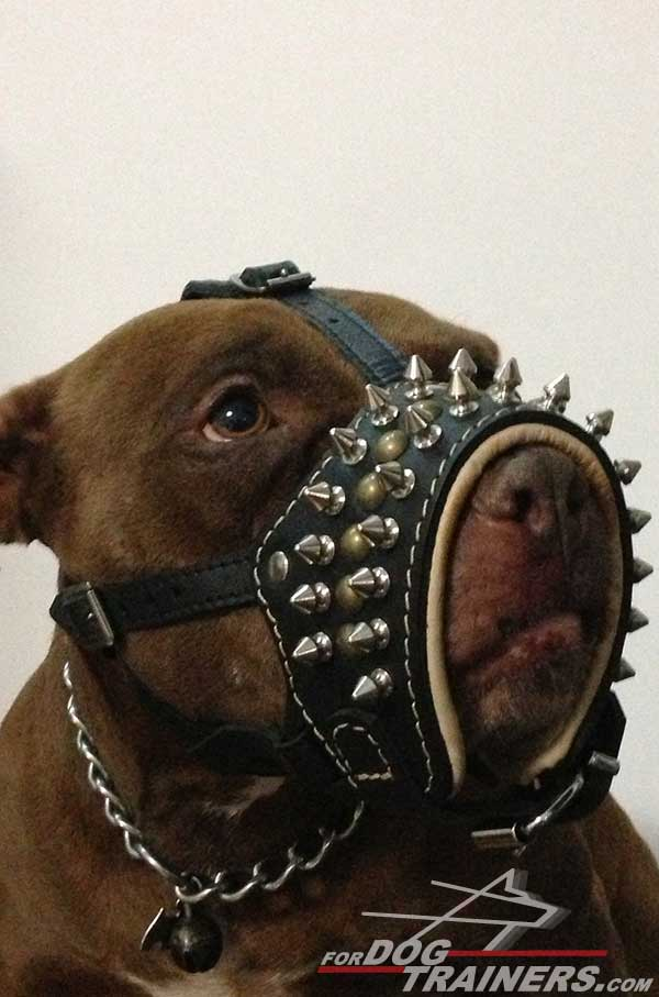 Securely stitched and riveted Pitbull muzzle