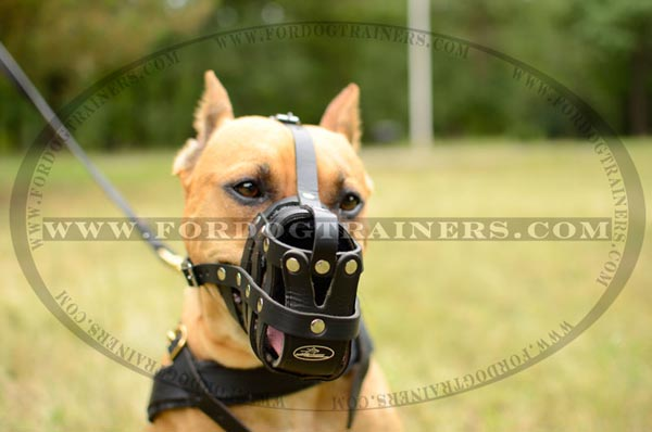 Leather Basket Pitbull Muzzle for Walking and Training