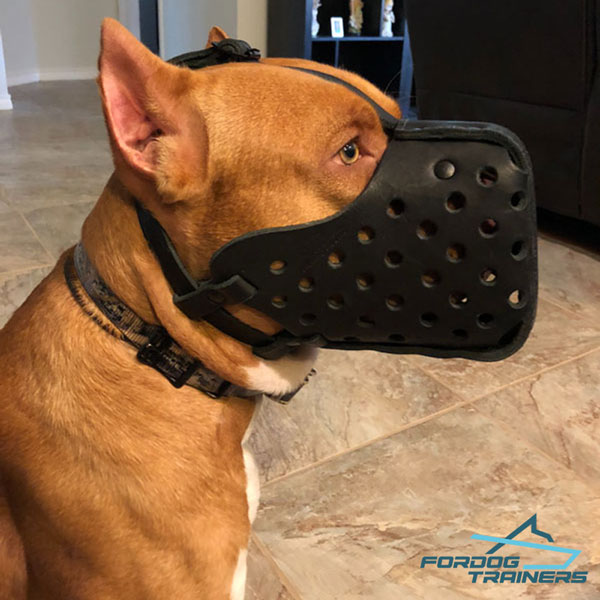 Pitbull dog muzzle of hard leather with ventilation holes