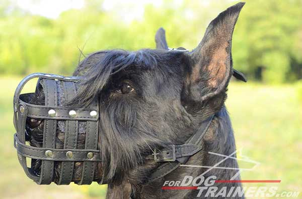Leather Basket Riesenschnauzer Muzzle Super Strong