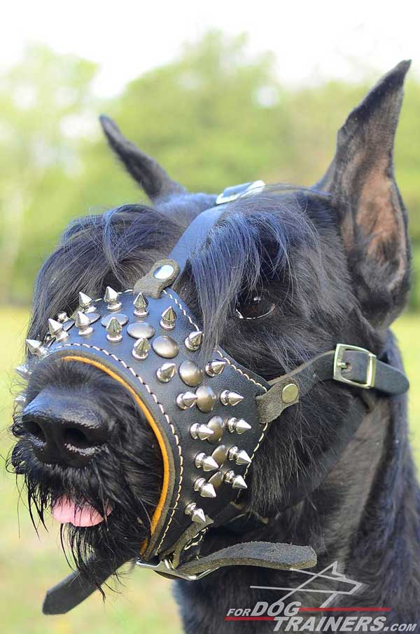 Open-Nosed Leather Riesenschnauzer Muzzle