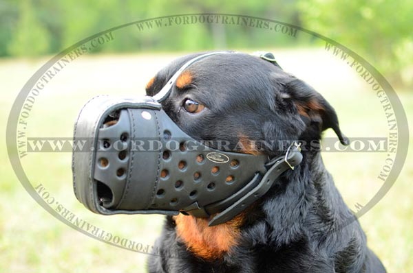 Rotty leather dog muzzle air-ventilated