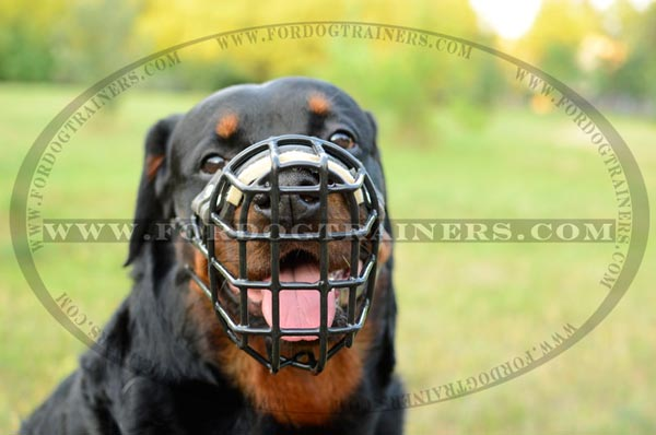 Rottweiler wire cage dog muzzle for winter
