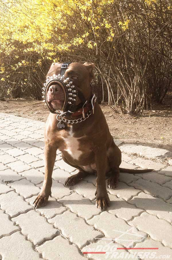 Anti-bite decorated leather Pitbull muzzle