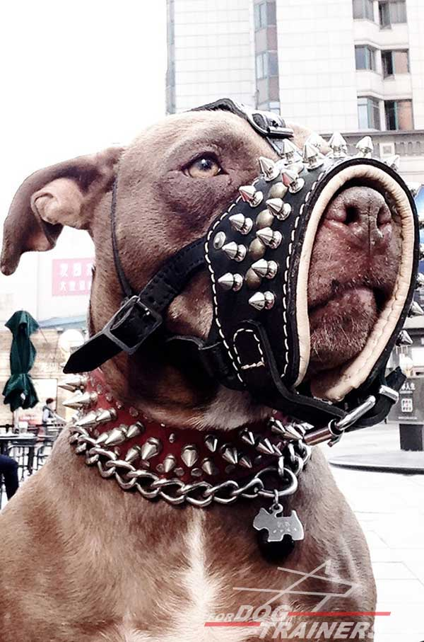 Royal Nappa padded leather Pitbull muzzle