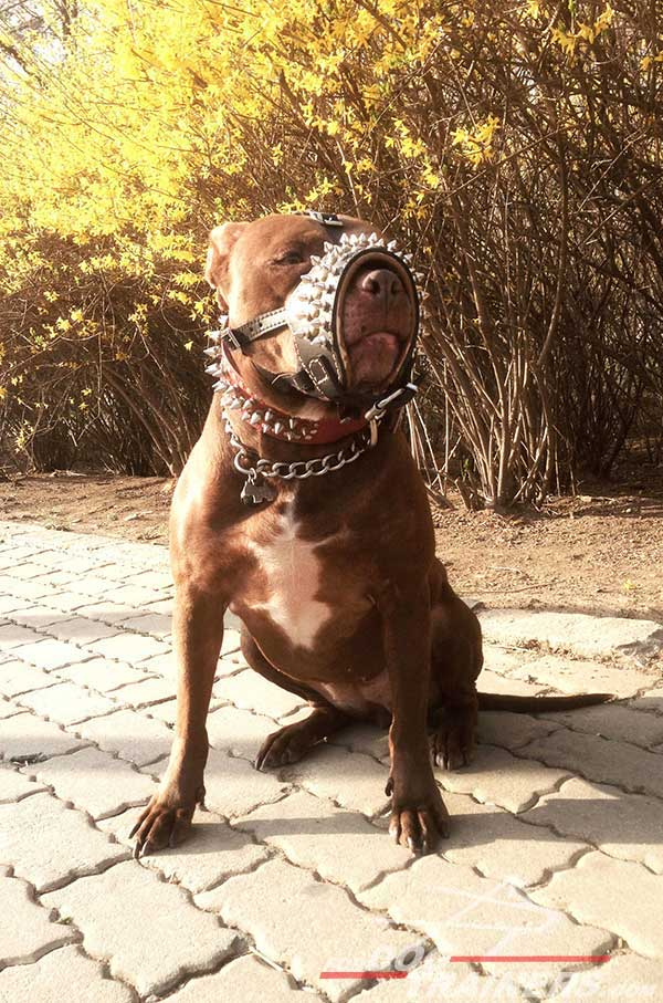 Soft inside Nappa padding for luxury Pitbull muzzle