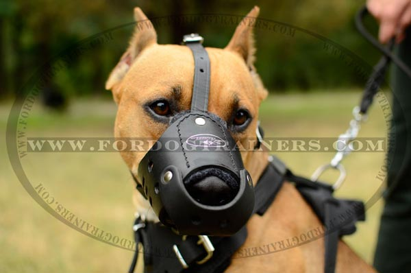 Anti-barking leather Pitbull muzzle for training