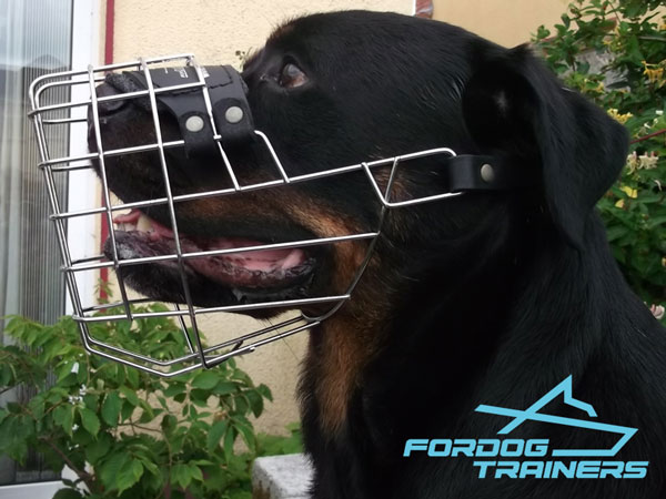 Lightweight Metal Construction Cage Muzzle for Daily Walks