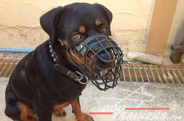 Rottweiler dog muzzle for winter and cold weather