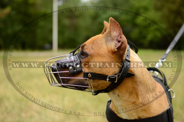 Strong reliable wire basket muzzle for Pitbull
