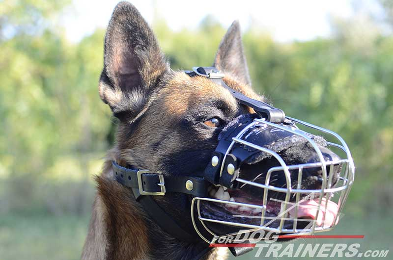 Wire Cage Belgian Malinois Muzzle For