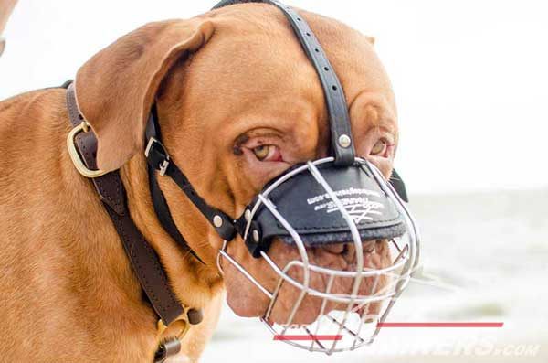 Wire cage muzzle air ventilated for Dogue-de-Bordeaux