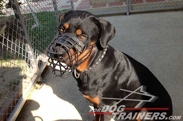 Wire cage muzzle for winter walking