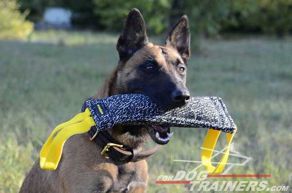 Two Handles Bite Tug for Belgian Malinois