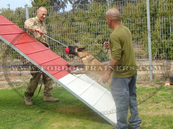 Malinois Dog Toy for training