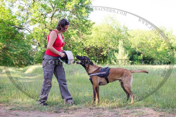 Belgian Malinois Bite Builder