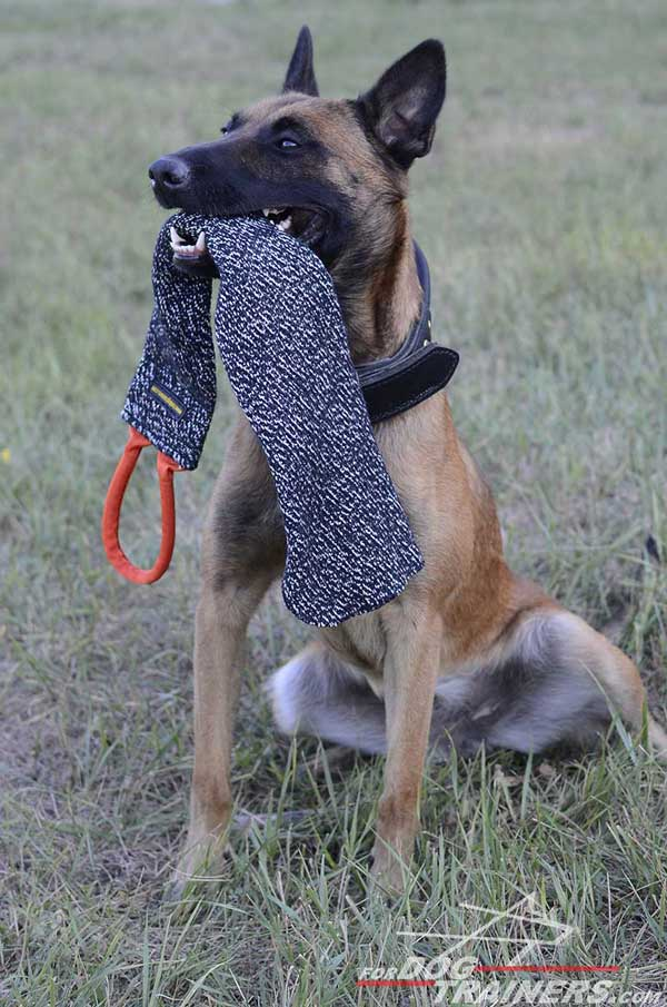 Dog-Safe Belgian Malinois Bite Rag