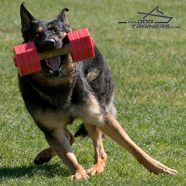 get ready for Schutzhund with Dog Dumbbell