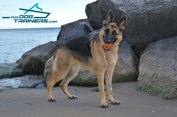 Rubber Toy Ball for Brynn German Shepherd