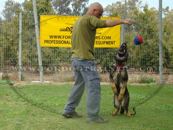 Bite Ball for Training German Shepherd puppies and young dogs