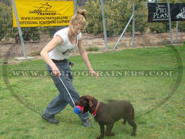 Labrador Dog Ball on string