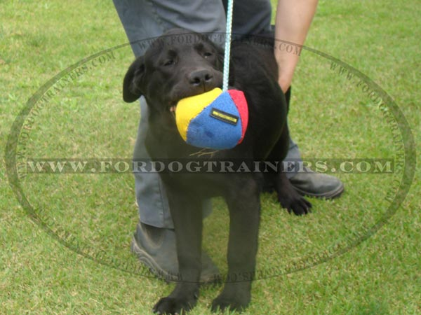 Labrador Dog Toy for training