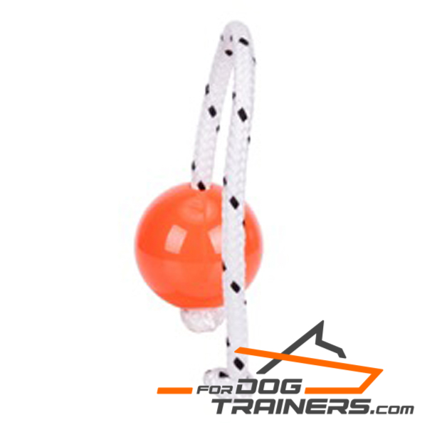 Ball for Dog for Training Young and Adult Dogs