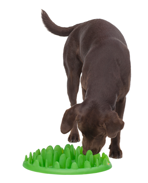 Effective Dog Feeder