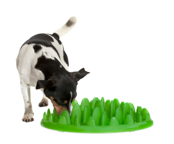 Plastic Interactive Dog Feeder