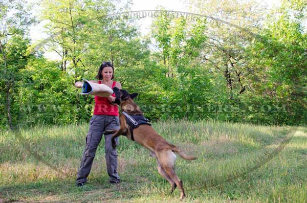 Belgian Malinois Professional Bite Training Developer