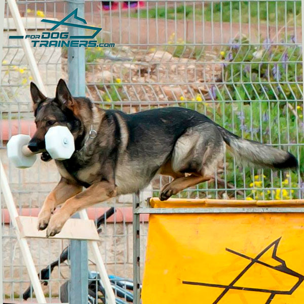 Schutzhund Dog Dumbbeel of Sturdy Wood