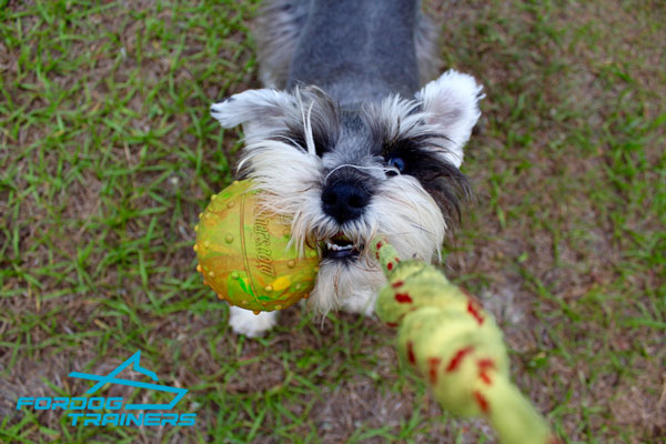 SBoxer Dog Training Ball for Funny Playing