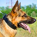 German Shepherd Leather Agitation Dog Collar for Comfortable Training