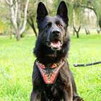 Red Flames Painted Leather German Shepherd Harness for Attack / Agitation Training