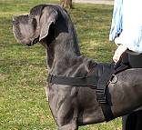 All Weather dog harness for tracking / pulling Designed to fit Great Dane [H6###1073 Nylon dog harness]