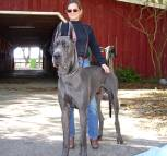 Great Dane Wire Basket Dog Muzzles Size Chart - Great Dane muzzle - Happy William and owner Margo on the picture