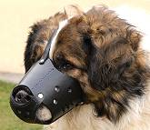 Everyday Kaukazian Ovcharka Leather dog muzzle - product code M51