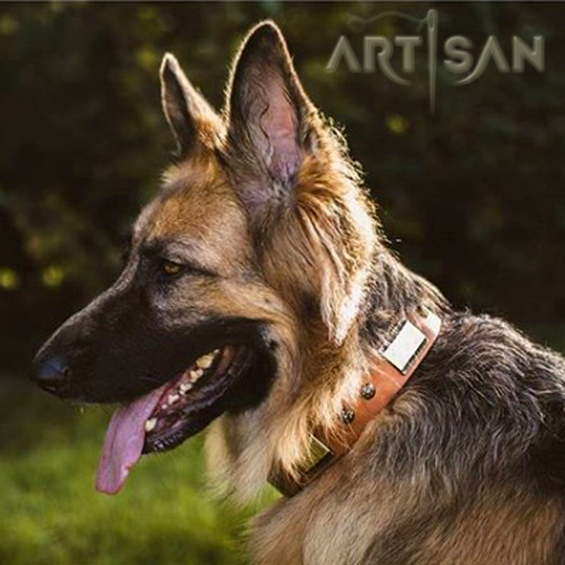 *Akela Establishes Matchless Style with Designer Tan Leather German Shepherd Collar from FDT Artisan - Click Image to Close