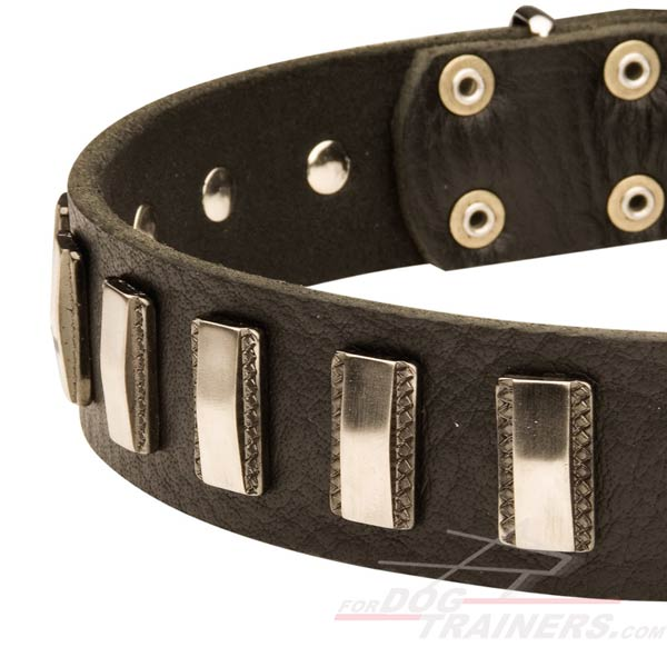 Leather Dog Collar with stunning plates