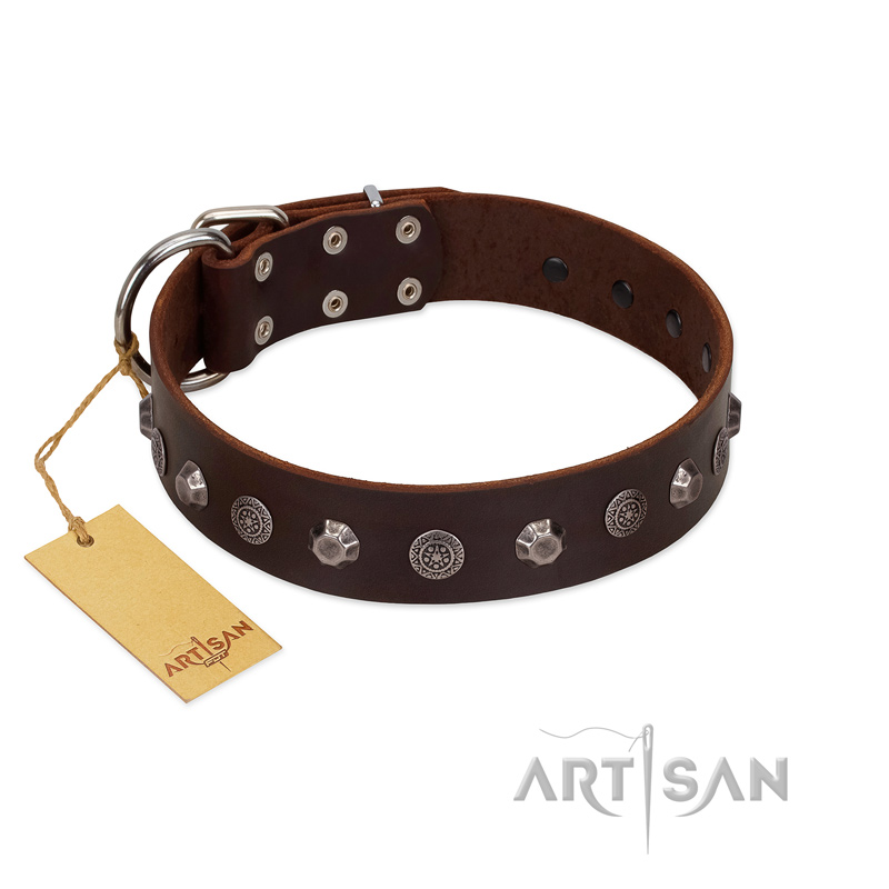 """Dark Chocolate"" Handmade FDT Artisan Brown Leather Dog Collar with Studs - Click Image to Close"