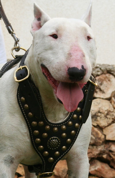 Royal Bull Terrier Harness - Exclusive Design Studded Leather Harness - Click Image to Close